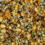 palomas belga mezcla_1-0fef0266